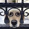 藏KEY的狗狗