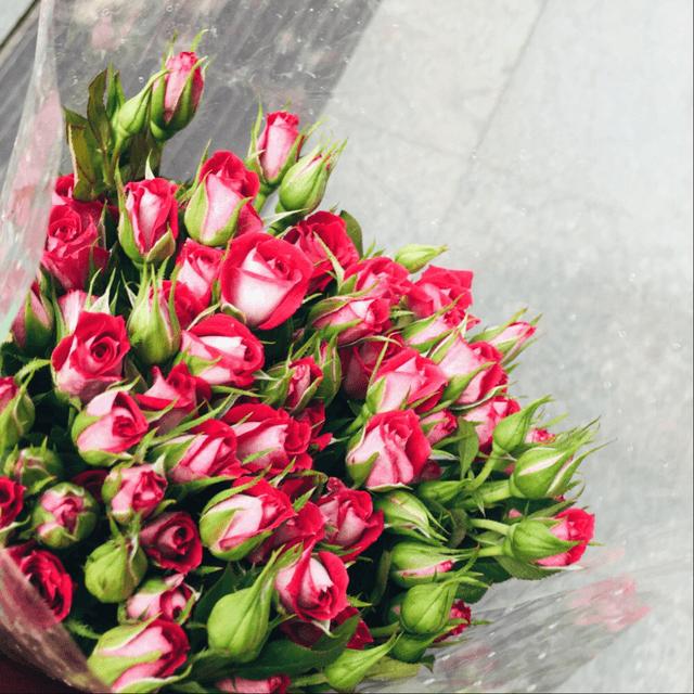 蔷薇 今天逛了花市
