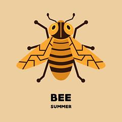 ▪️  蜜蜂  ▫️