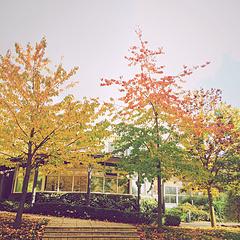 一棵有渐变色的树。