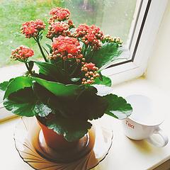 心情Blooming