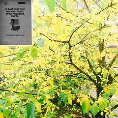 秋天的颜色 | 厨房窗外的树