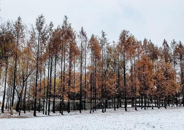 杭州的雪真的超美🥰🥰🥰 爱这座城❄️❄️❄️