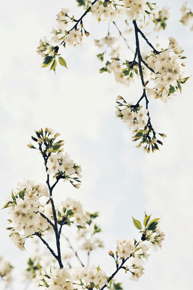 【给春天穿件花碎衣】