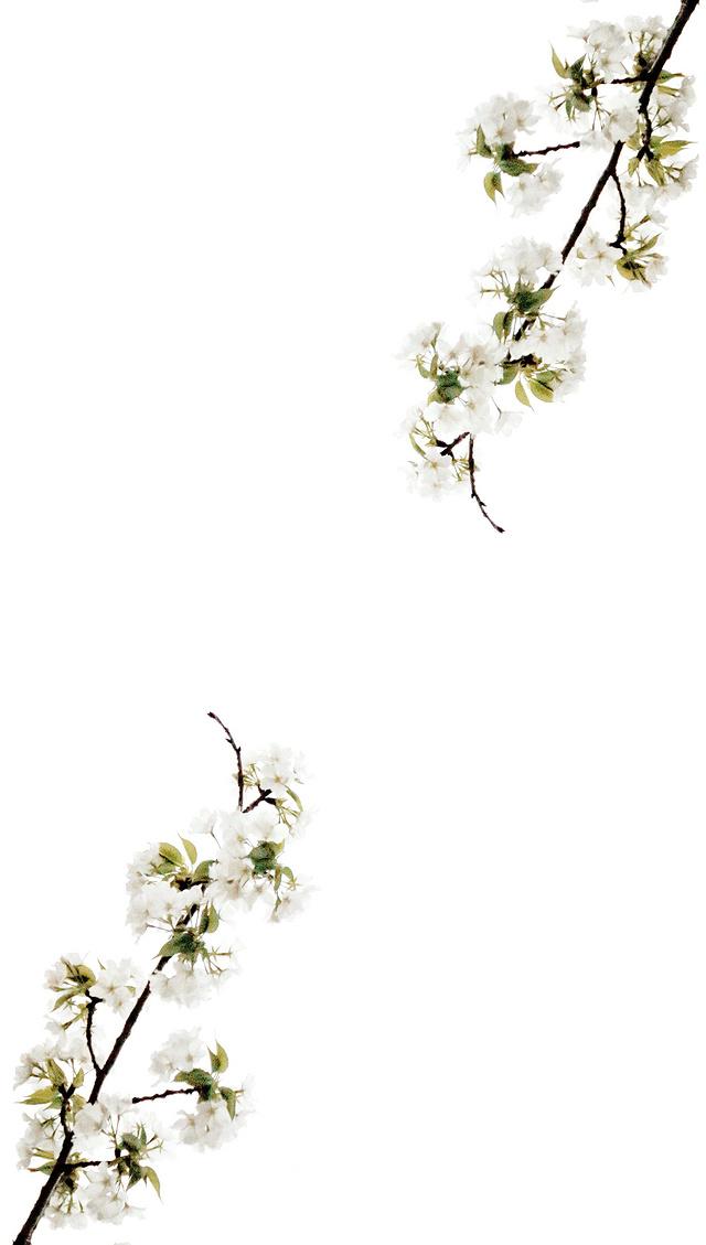 【花开两朵,各表一支】