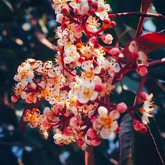 国际惯例 植物识别😅😅
