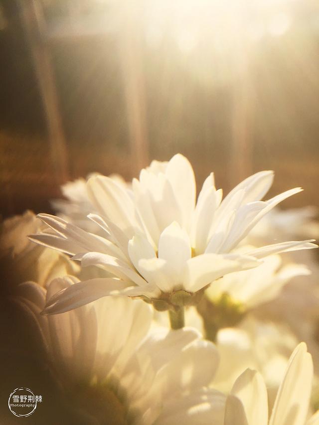 幸福的阳光来得让人猝不及防