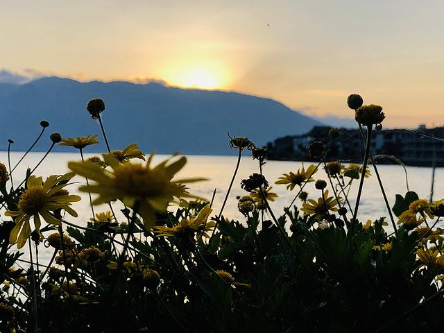 远山与眼前的花儿,皆在暮色中摇曳