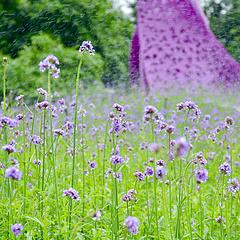 五月是浪漫紫的季节