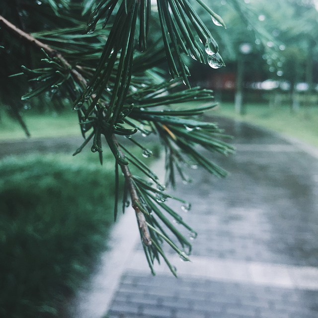 雨季又来了
