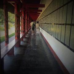 长廊里没有长颈鹿。🌃