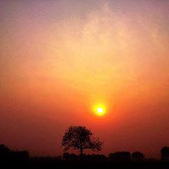 夕阳下没有长颈鹿。🌇