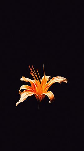 时光中的花花草草