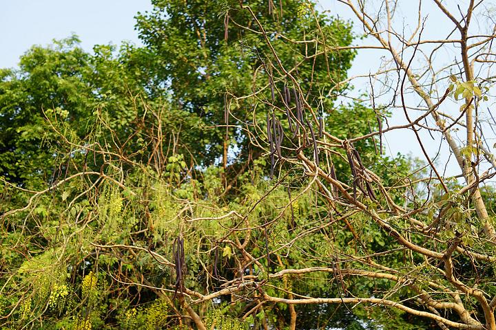 长在树上的小黑瓜? 管它的