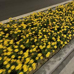 下班通勤路上的小黄花🌼