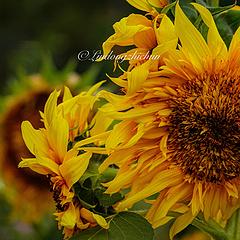 橙黄亮色都特别阳光。向日葵跟着太阳走,朝气蓬勃,绽放着积极的颜色。