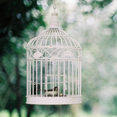 人生就像鸟笼,有太多身不由己。