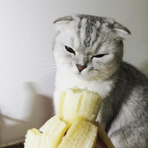 我讨厌香蕉…