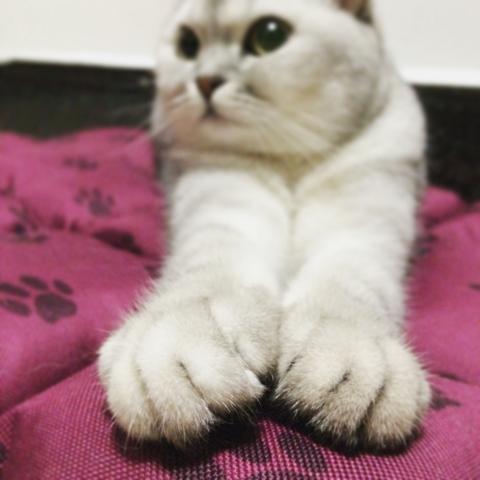 萌萌的小爪子~