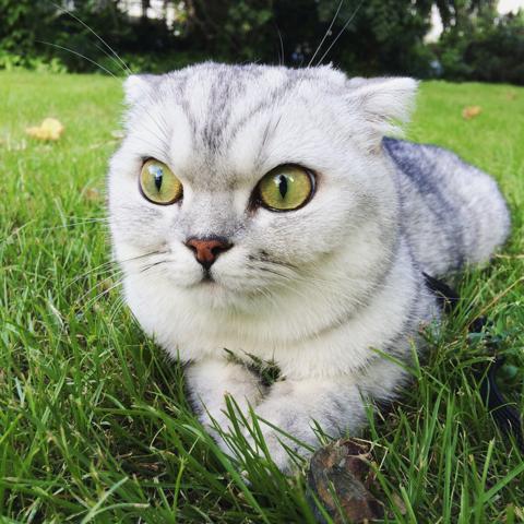 说好的遛猫呢?!趴着算什么英雄好喵啊!