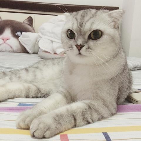 在这个看脸的年代,身为一只猫我也觉得压力好大啊…
