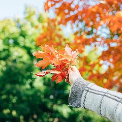 其实秋枫橙色的时候最漂亮