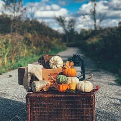 带上南瓜寻找秋色