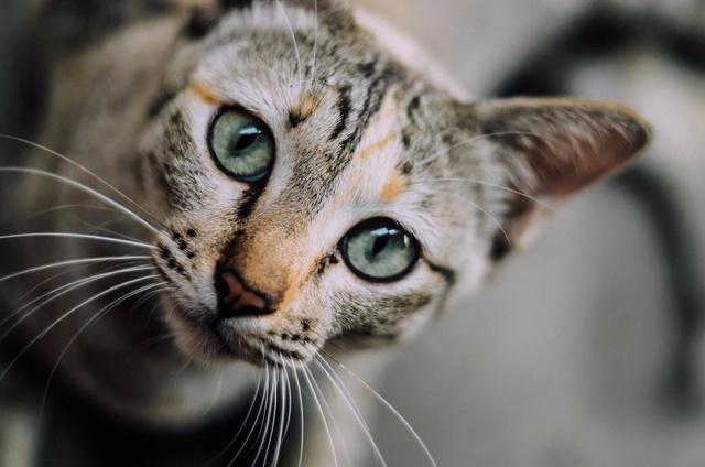 #P10# 猫的报恩